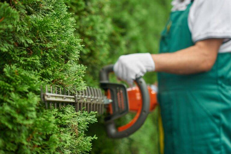 ground-yard-cleaning-services